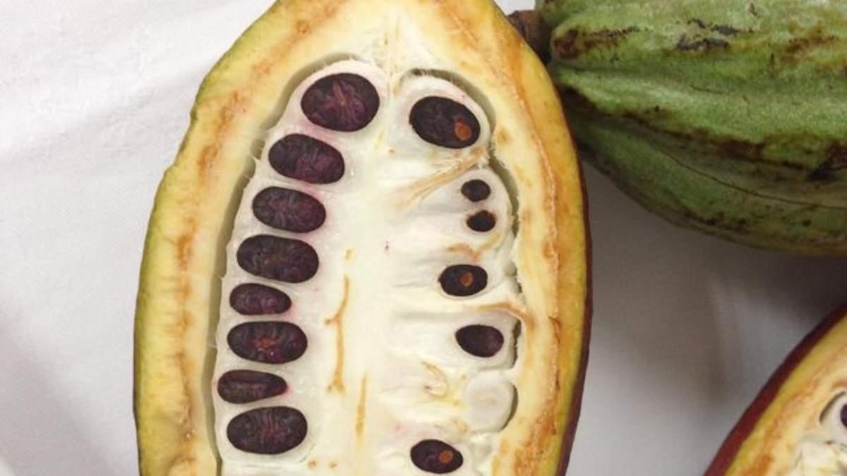 Где растет какао: рассказывает кондитер Лиза Глинская