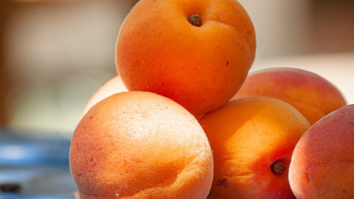 Сладкие абрикосы: полезные советы, как выбрать