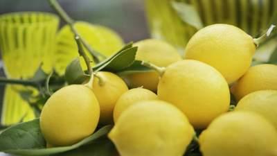 Лимон – користь та застосування в гастрономії: цікаві поради від Марко Черветті