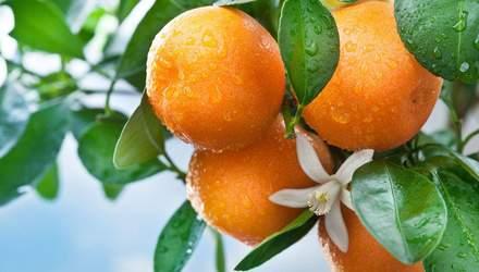 Чим корисні апельсини та як правильно обрати соковиті цитрусові: корисні поради