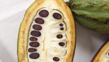 Де росте какао: кондитерка Ліза Глінська про шоколодне дерево