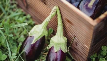 Баклажани: користь, шкода, калорійність та застосування в кулінарії
