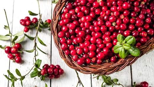 Журавлина – з чим їсти, користь і шкода смачної ягоди